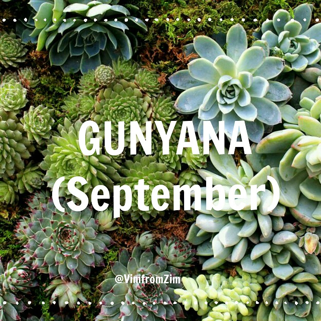 Gunyana - September - VimfromZim