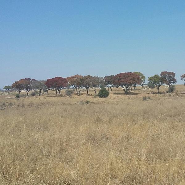 vimfromzim-imire-landscape